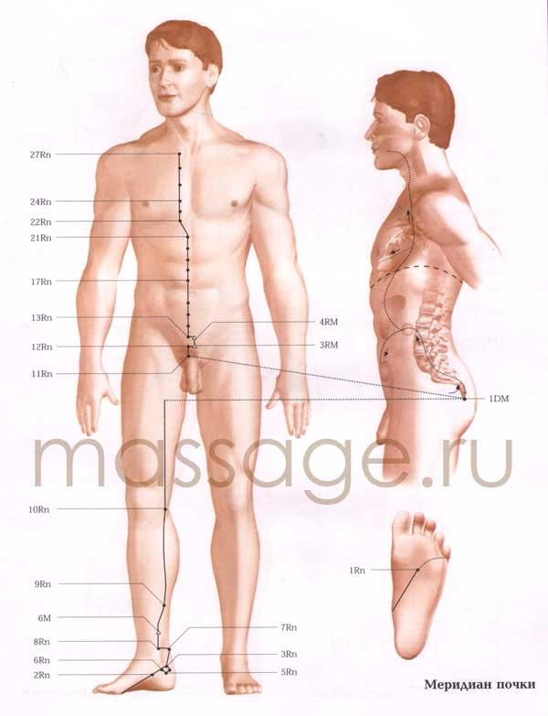 Атлас точек акупунктуры  Kidney