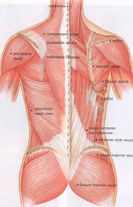 Не стоит, конечно, лечить остеохондроз шейного отдела только народными средствами, но они могут стать прекрасным